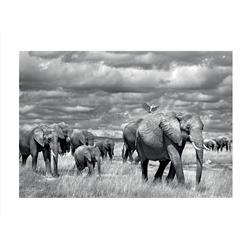 Elephants of Kenya (24 x 32
