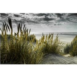 Marram Grass, 42 x 26