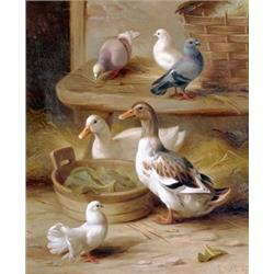 Ducks and Pigeons in Farmyard