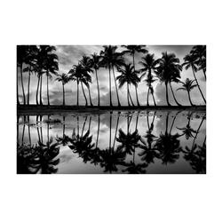 BVL325 - Palm Reflection (32x24
