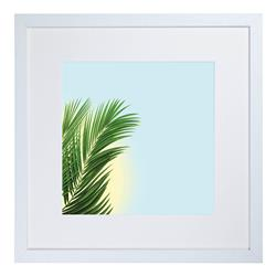 CA15 - Fan Palm