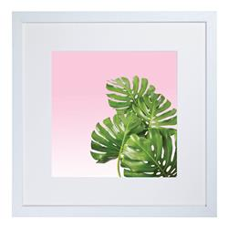 CA12 - Monstera