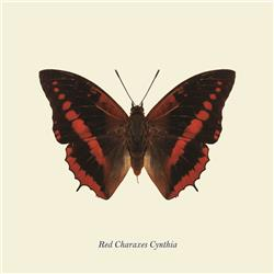 Red Charaxes Cynthia