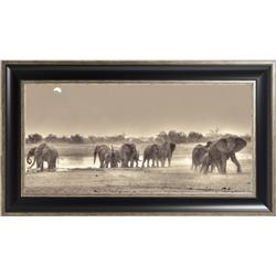 Savanna Elephants - 38