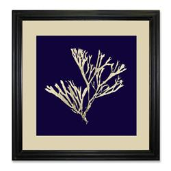 ACB14 - Seaweed on Navy II, 20 x 20
